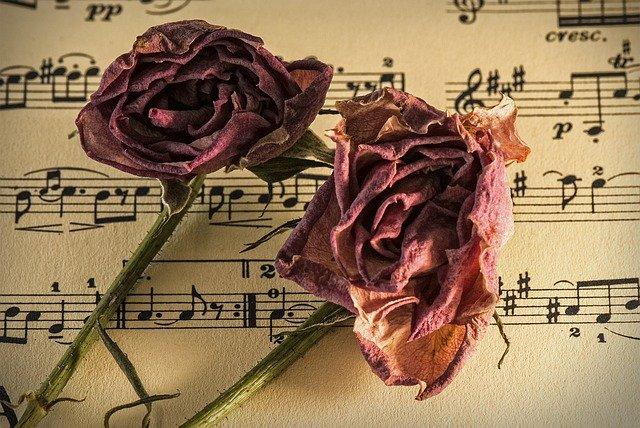 sušená růže